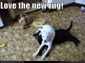 dog-cat-supplies