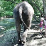 Limba walking away at the Bowmanville Zoo