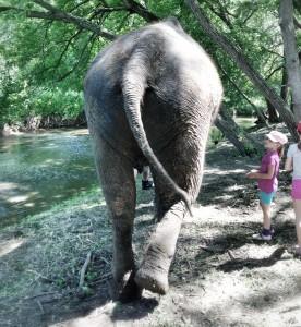 Limba walking away at the Bowmanville Zoo