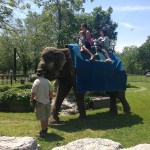 Elephant Rides With Limba ($6 extra)