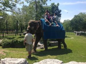 Elephant Rides With Limba ($6 extra)